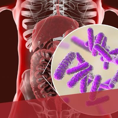 Innenansicht eines Körpers gezeichnet, Bildausschnitt mit Darmbakterien