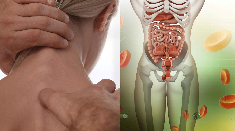 Verdauung meets Osteopathie