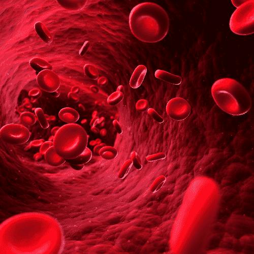 einzelne rote Blutkörperchen